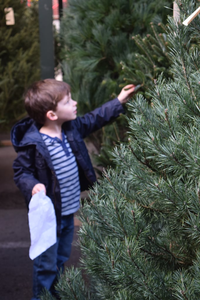 A Real Christmas Tree: Learning Activities for Kids