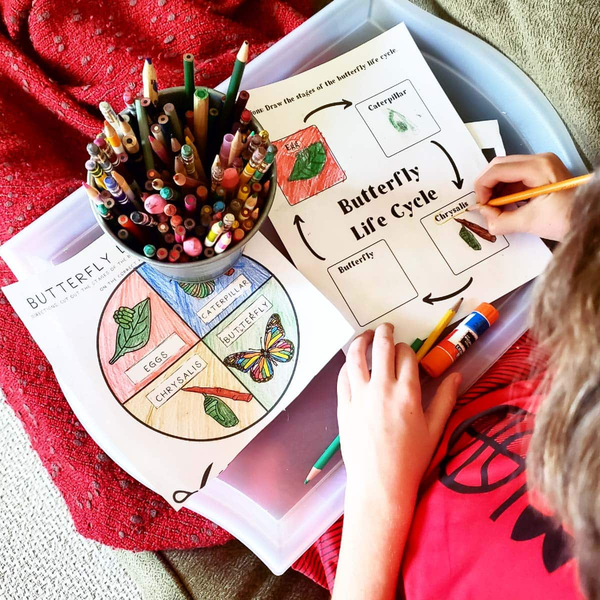 Homeschooling Fifth Grade